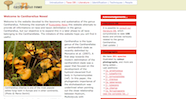 Cantharellus News Website